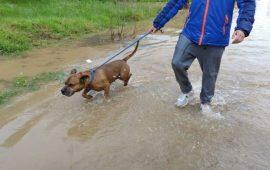 Acogidas en Los Barrios para los perros del Centro de Protección Animal por las inundaciones
