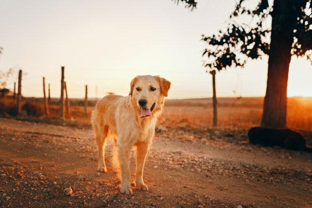 Perro al sol - Refrescar a tu perro en verano