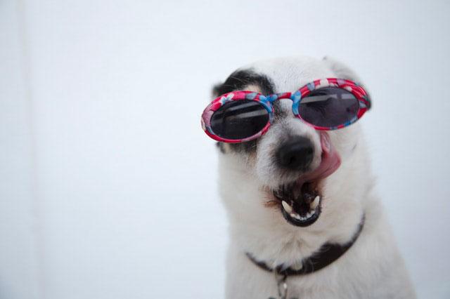Perro con gafas - Refrescar a tu perro en verano