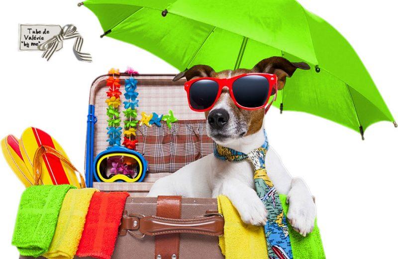 ¿Cómo puedo viajar con mi mascota?