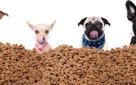 400.000 raciones de alimento para perros y gatos vulnerables residentes en Cataluña