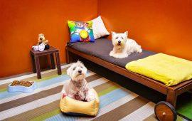 ¿Qué es un hotel para perros 5 estrellas?