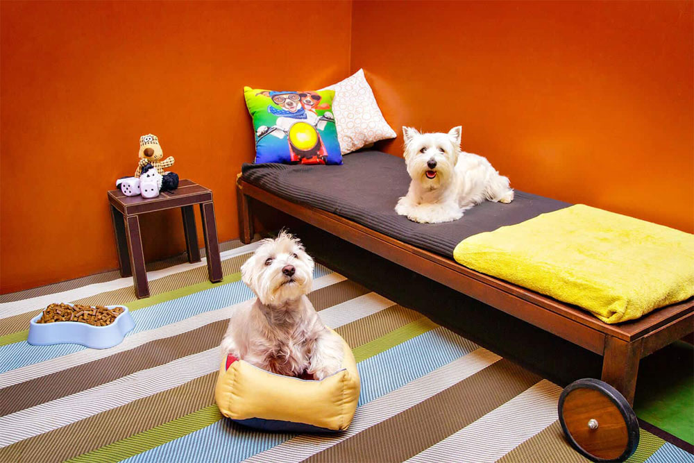Hotel canino Coruña
