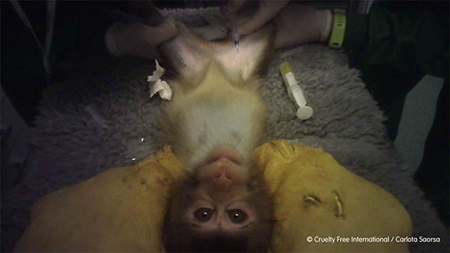 Cruelty Free International destapa maltrato y máxima crueldad con los animales en un laboratorio de Madrid