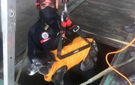 El Cuerpo de Bomberos de Logroño se actualiza con diferentes elementos de seguridad y rescate de mascotas