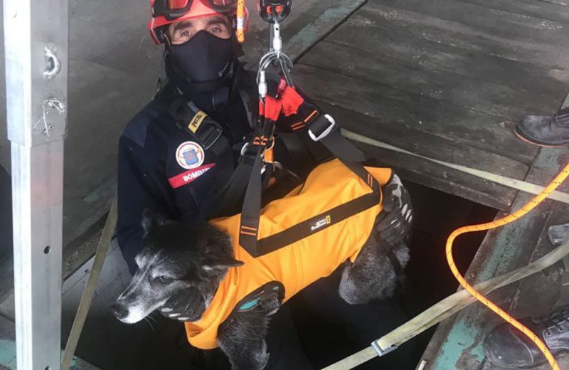 Arnés para rescatar perros