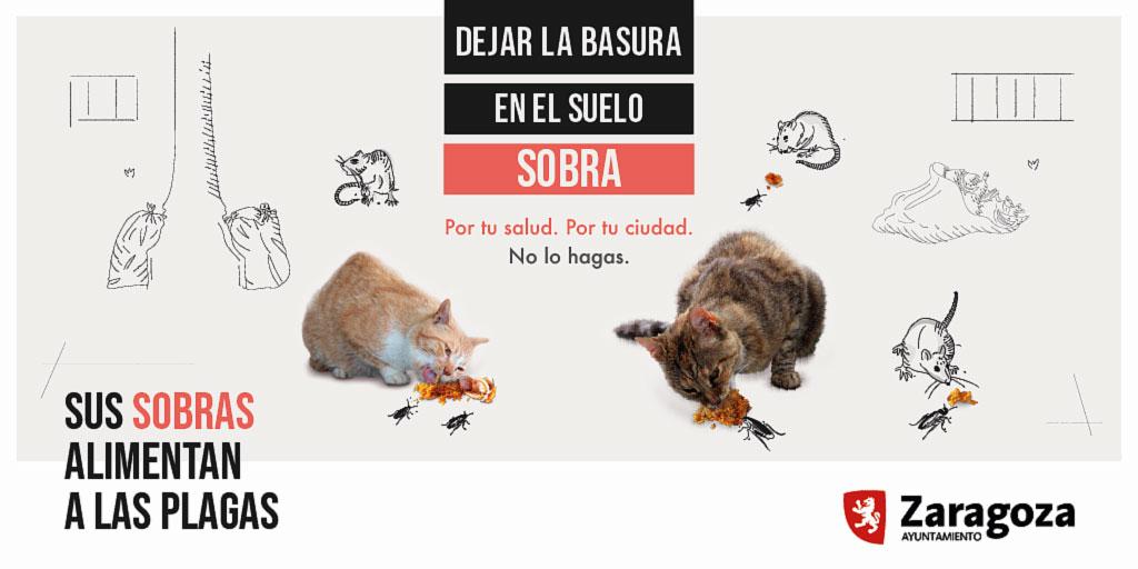 Campaña-Zaragoza-1