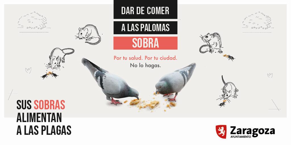 Campaña Zaragoza sobras