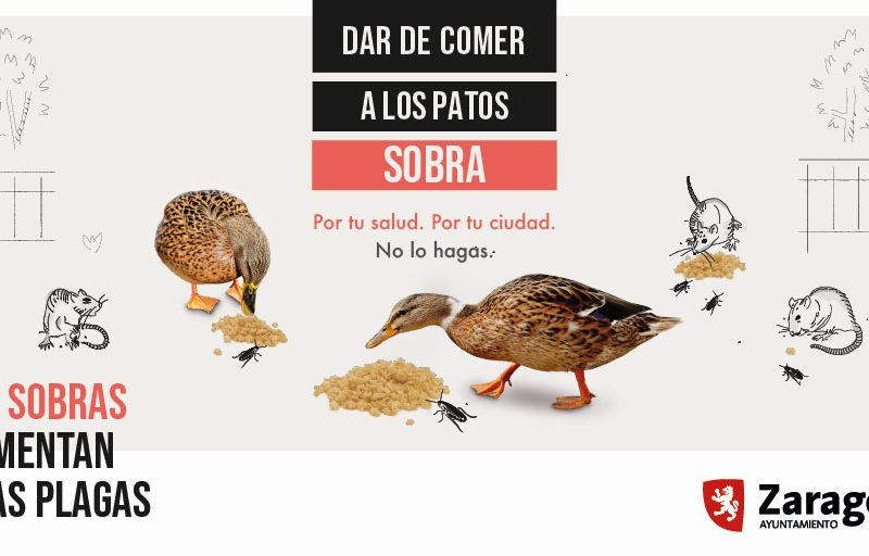 Campaña Zaragoza