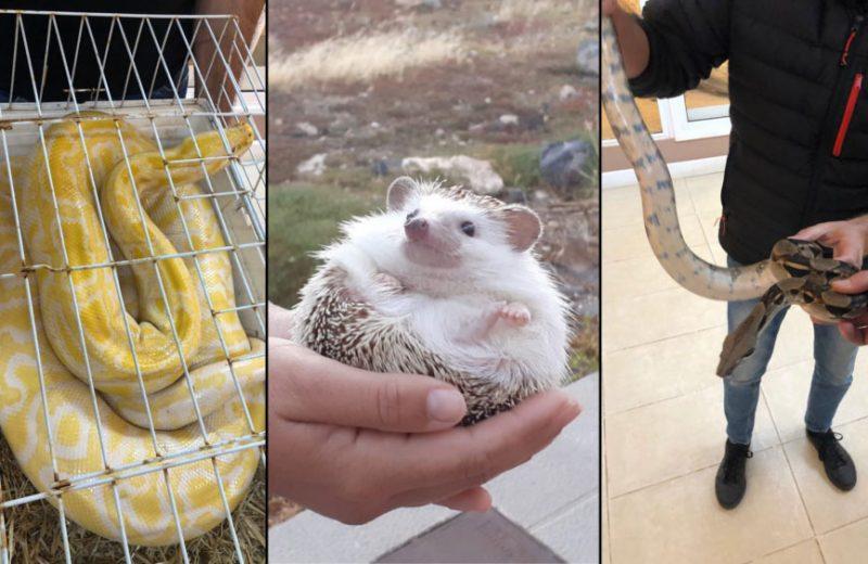 La Policía Autonómica decomisa en Tenerife tres animales exóticos que estaban presuntamente en venta a través de internet