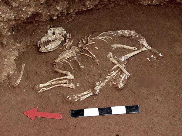 Fósiles de perro