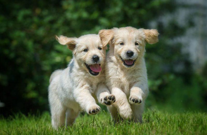 La RSCE propone universalizar la identificación canina y la educación para acabar con los abandonos