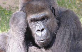 La extinción de las especies más grandes amenaza el equilibrio en los procesos ecológicos a escala global
