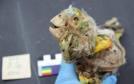 Hace más de 1.000 años se criaban loros y guacamayos por sus plumas