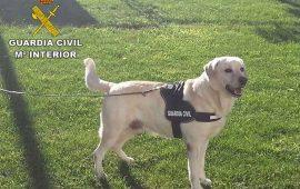 «El olor en la escena del crimen»; análisis de los perros policía de la científica