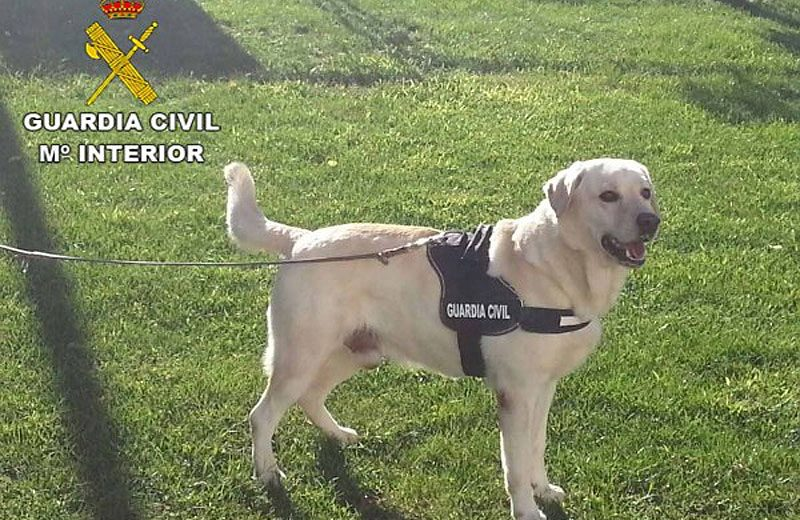 Guardia Civil perruno
