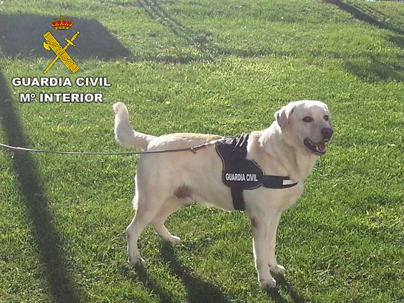 Guardia Civil perruno