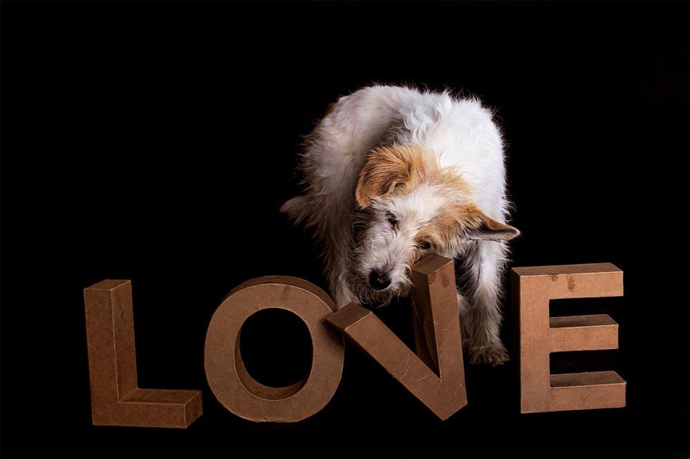 Herencia perros 1