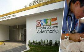 Recogen firmas para crear una clínica veterinaria pública en Ceuta