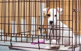 #NoTengoPrecio: nueva campaña para detener el tráfico de animales de compañía