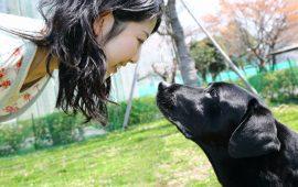 La unión entre el perro y su dueño refuerza la unión emocional