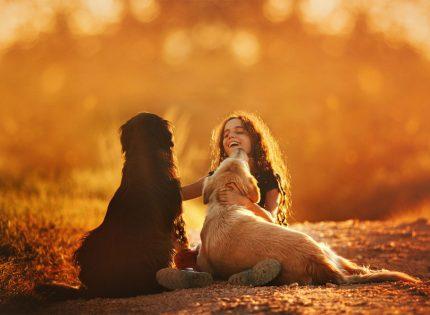 Paterna lanza una campaña especial para promover la acogida y adopción de animales del Refugio