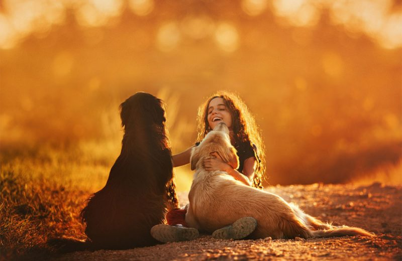Niños con perros