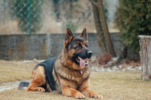 Adiestramiento canino y educación: ¿en qué consisten?