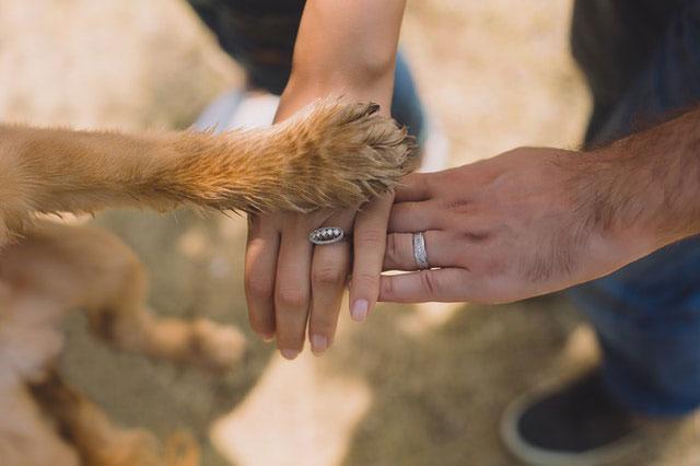 Perros familia