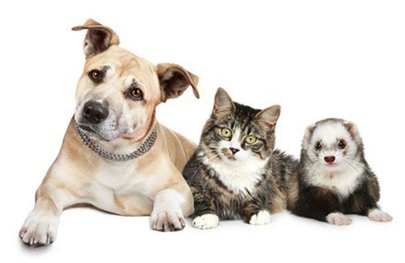 Consideraciones de Intercids sobre sobre el nuevo sistema central de registros de protección animal