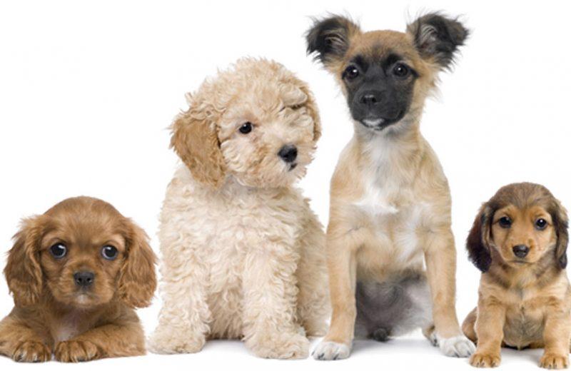 Perros saludables