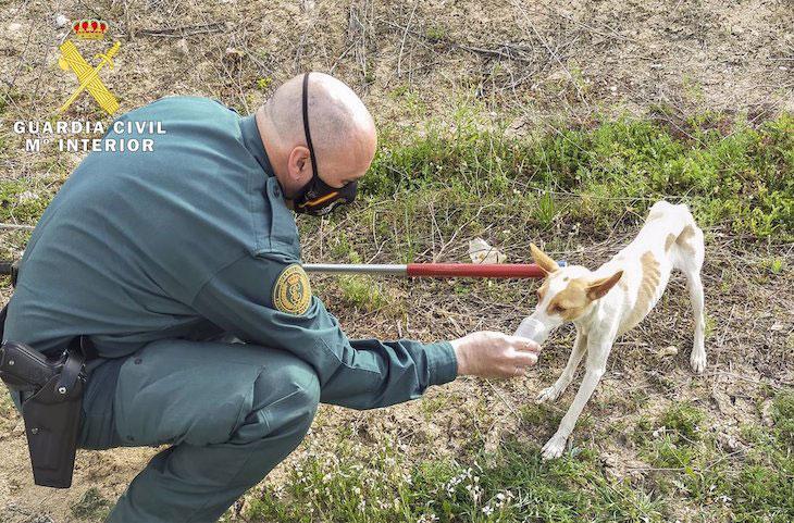 Rescate perro balsa