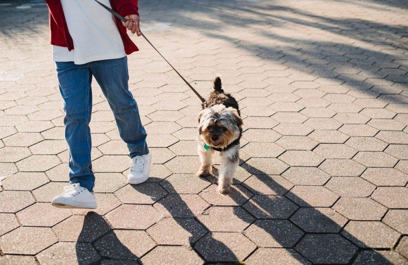 Tapas para perros