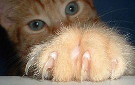 ¿Las uñas de los gatos se caen?