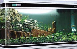 ¿Qué elementos no pueden faltar en tu acuario?