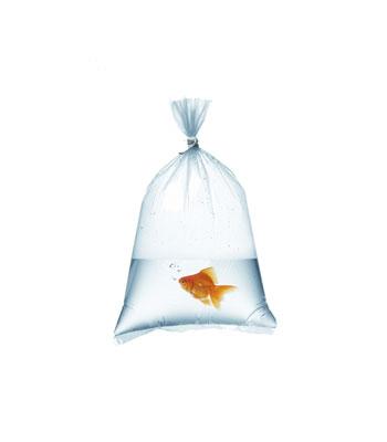 Bolsa para peces
