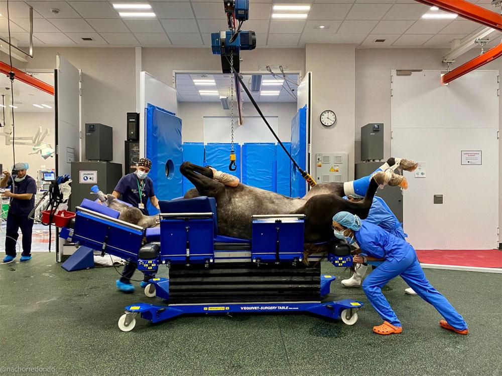 Caballo anestesiado