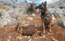 La Junta de Andalucía reduce en un 70% los cebos envenenados contra la fauna