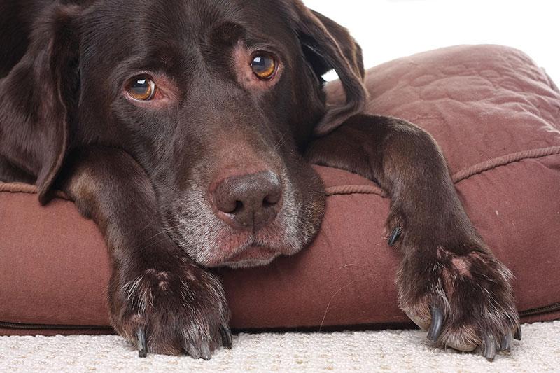 Eutanasia en perros, la decisión más difícil