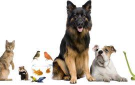 Luz verde a la Proposición de Ley de Protección de los animales de compañía del Gobierno Vasco