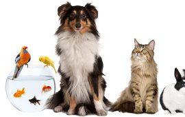 Ayudar a nuestros animales a vivir una mudanza sin estrés