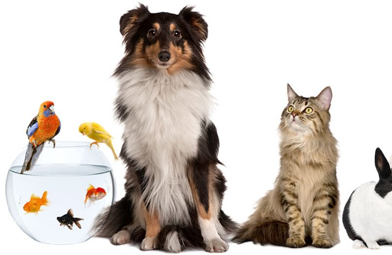 Mudanza con mascotas