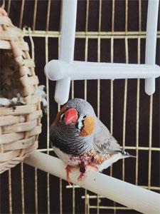 Mudanza con aves