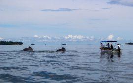 Observación de ballenas por parte de turistas