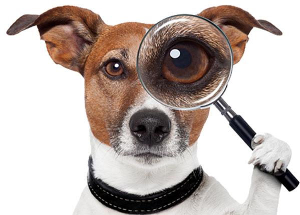 Perro buscador