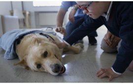 Montegatto y el CHUAC, pioneros en el estudio de la detección de la diabetes con perros