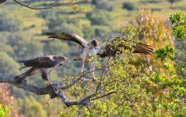 Cada año ingresan más de 50.000 animales en los Centros de Recuperación de Fauna Silvestre en España