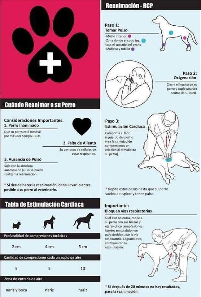 Reanimación cardíaca perros