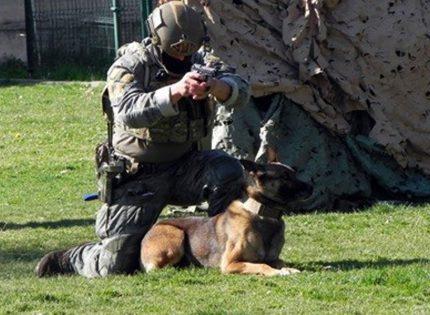 El perro de trabajo en las Fuerzas Armadas