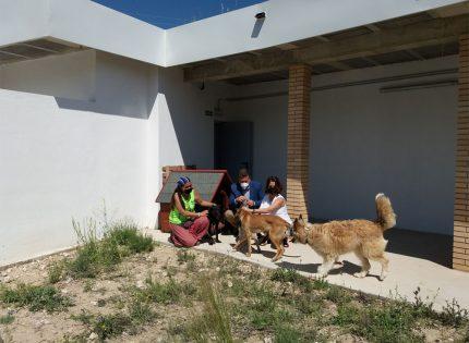 El albergue de perros y gatos de Teruel acoge animales que necesitan cuidados especiales